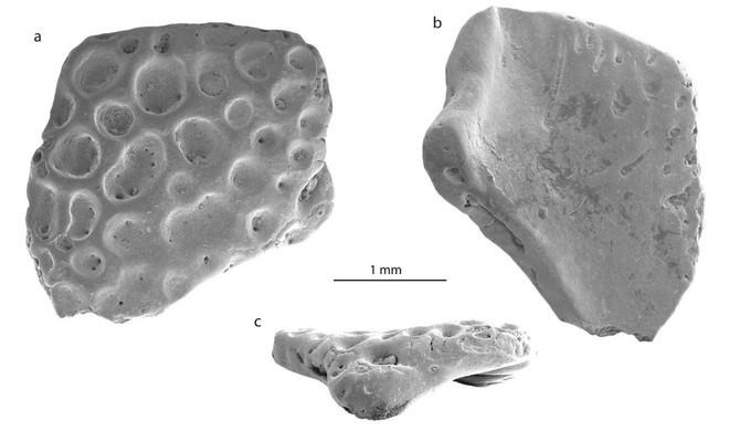 Giới khoa học sửng sốt khi phát hiện hóa thạch ếch Nam Mỹ tại Nam Cực - Ảnh 1.