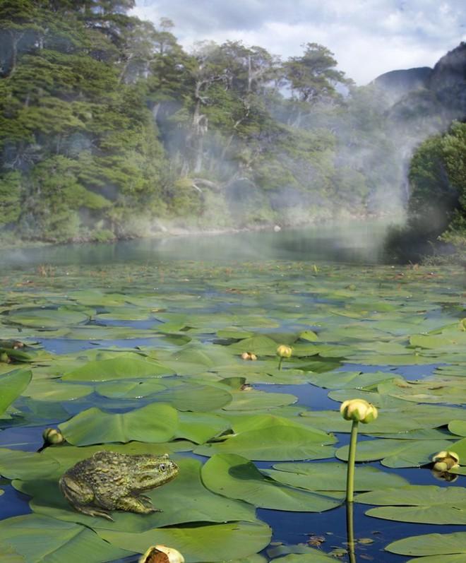 Giới khoa học sửng sốt khi phát hiện hóa thạch ếch Nam Mỹ tại Nam Cực - Ảnh 2.