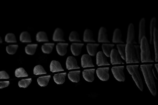 Cây dương xỉ hươu – 1/1000 sec, f/4.5, ISO 200