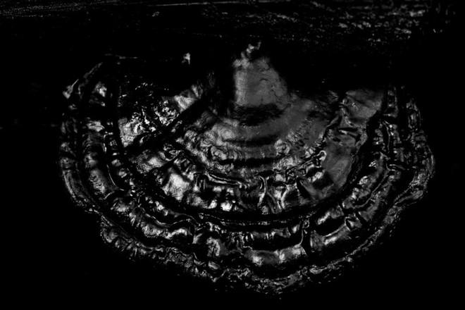 Nấm polypore sau một cơn mưa lớn – 1/500 sec, f/6.3, ISO 3200
