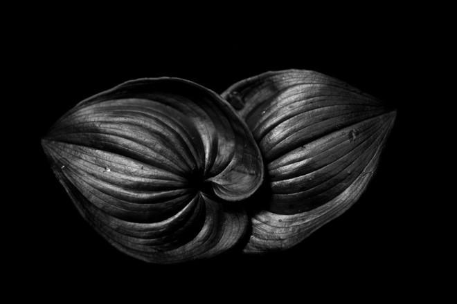 2 lá hoa loa kèn – 1/500 sec, f/6.3, ISO 500