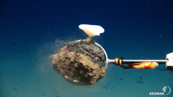 Sẽ mất hàng thập kỷ để đáy đại dương hồi phục sau hoạt động khai khoáng dưới biển của con người - Ảnh 1.