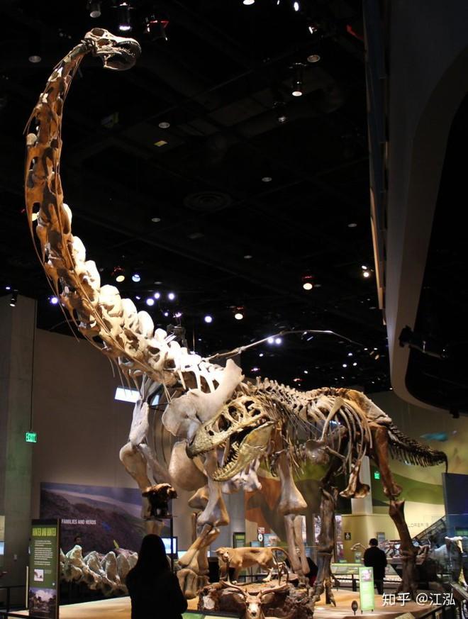 Nghiên cứu mới cho thấy người anh em của khủng long Velociraptor tại Bắc Mỹ có tổ tiên bắt nguồn từ Châu Á - Ảnh 11.