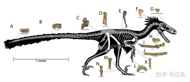 Nghiên cứu mới cho thấy người anh em của khủng long Velociraptor tại Bắc Mỹ có tổ tiên bắt nguồn từ Châu Á - Ảnh 12.