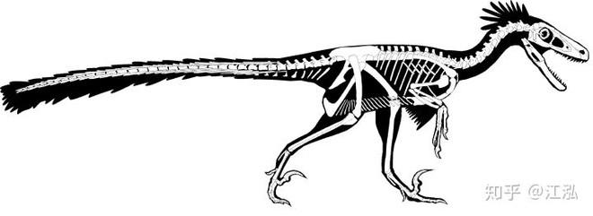 Nghiên cứu mới cho thấy người anh em của khủng long Velociraptor tại Bắc Mỹ có tổ tiên bắt nguồn từ Châu Á - Ảnh 8.