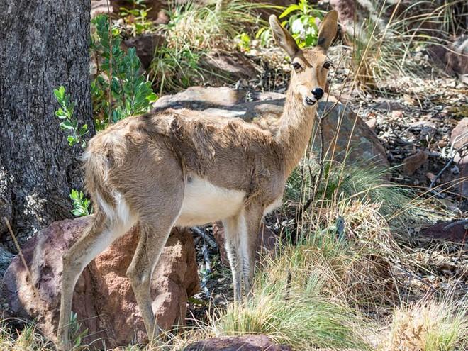 Vẻ đẹp của 24 loài động vật mới được đưa vào sách đỏ, có thể chúng ta sẽ không còn nhìn thấy chúng trong tương lai - Ảnh 8.