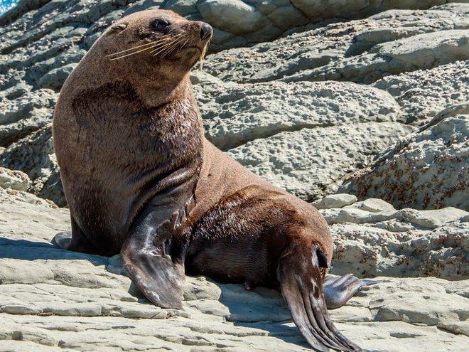 Vẻ đẹp của 24 loài động vật mới được đưa vào sách đỏ, có thể chúng ta sẽ không còn nhìn thấy chúng trong tương lai - Ảnh 29.