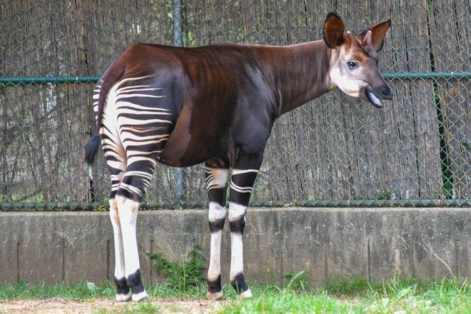 Vẻ đẹp của 24 loài động vật mới được đưa vào sách đỏ, có thể chúng ta sẽ không còn nhìn thấy chúng trong tương lai - Ảnh 3.