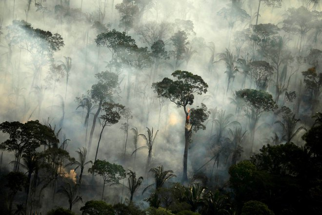 Rừng Amazon vẫn đang cháy ngày càng dữ dội hơn: 1.202 km2 rừng bị xóa sổ trong 4 tháng, ngang bằng diện tích một quốc gia - Ảnh 1.