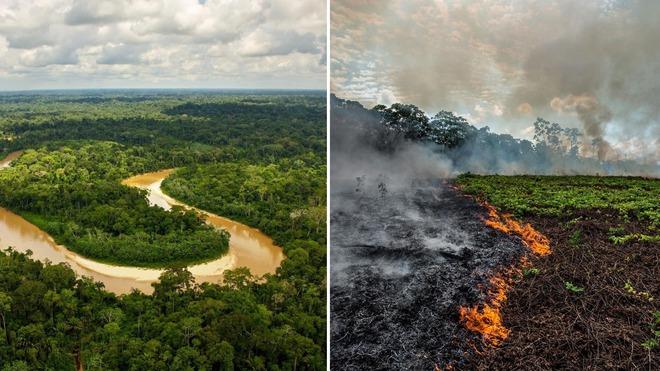 Rừng Amazon vẫn đang cháy ngày càng dữ dội hơn: 1.202 km2 rừng bị xóa sổ trong 4 tháng, ngang bằng diện tích một quốc gia - Ảnh 2.