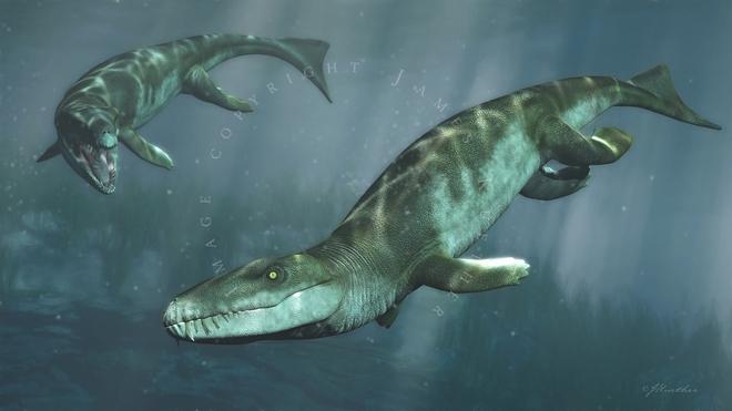Cá sấu tiền sử dưới đại dương chỉ cần một cú đớp cũng có thể làm thủng bụng ngư long - Ảnh 8.