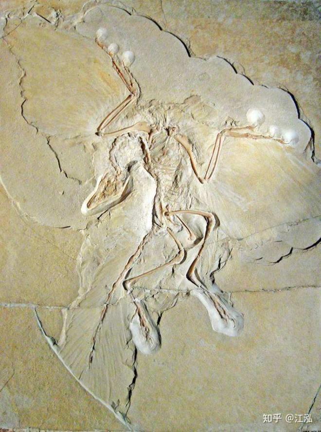 Cá sấu tiền sử dưới đại dương chỉ cần một cú đớp cũng có thể làm thủng bụng ngư long - Ảnh 2.