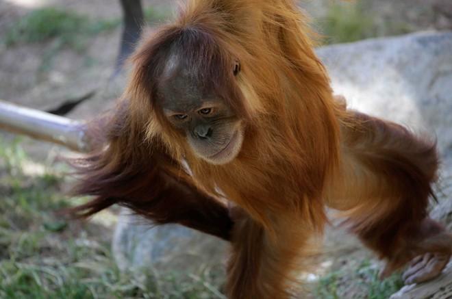 Động vật trong sở thú đang cảm thấy cô đơn khi thiếu vắng khách tham quan vì Covid-19 - Ảnh 1.