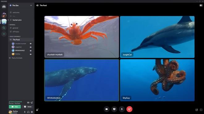 Discord cập nhật tính năng video call, chỉ cần bấm một nút là tham gia ngay phòng chat - Ảnh 1.
