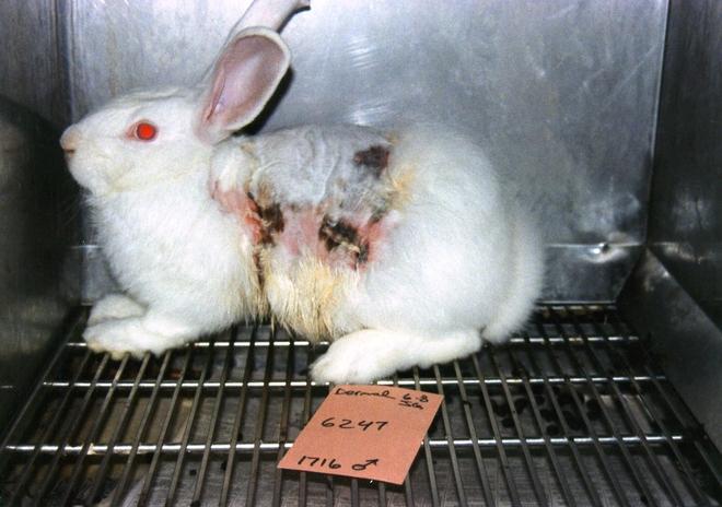 Những hũ da người này sẽ cứu sống hàng triệu động vật thí nghiệm đang xả thân phục vụ ngành công nghiệp mỹ phẩm - Ảnh 3.