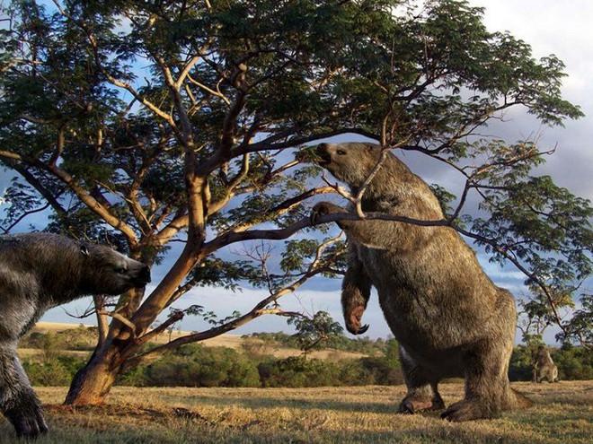 Chuyện thật như đùa, loài động vật tiền sử bị chết vì chính phân của mình - Ảnh 5.