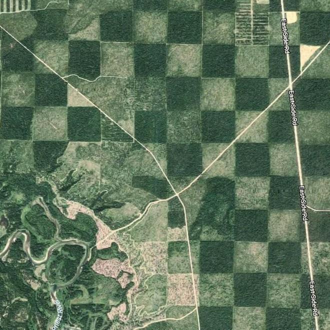 Khu vực rừng kỳ lạ trông giống như một bàn cờ khi được nhìn từ trên cao - Ảnh 3.