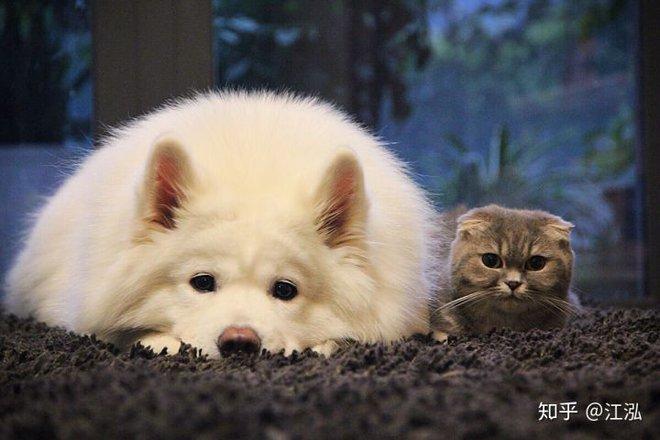 Khám phá khảo cổ mới cho thấy chó và mèo trước đây có chung một tổ tiên - Ảnh 12.