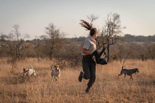 Chó được huấn luyện để bảo vệ động vật hoang dã đã cứu được 45 con tê giác khỏi những kẻ săn trộm - Ảnh 1.