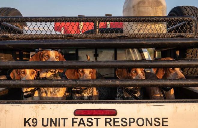 Chó được huấn luyện để bảo vệ động vật hoang dã đã cứu được 45 con tê giác khỏi những kẻ săn trộm - Ảnh 6.