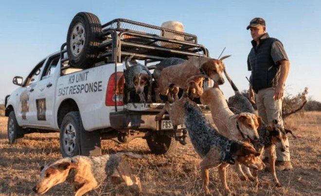 Chó được huấn luyện để bảo vệ động vật hoang dã đã cứu được 45 con tê giác khỏi những kẻ săn trộm - Ảnh 8.