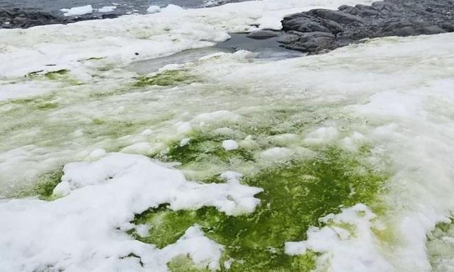 Tuyết Nam Cực bỗng nhiên chuyển sang màu xanh lá, có thể thấy rõ từ vũ trụ: Điều gì đang diễn ra ở đây vậy? - Ảnh 1.