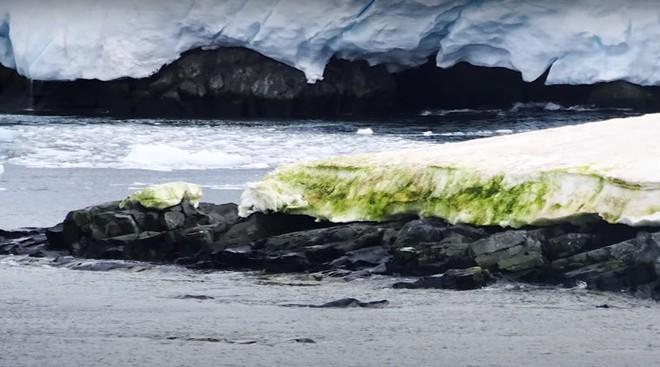 Tuyết Nam Cực bỗng nhiên chuyển sang màu xanh lá, có thể thấy rõ từ vũ trụ: Điều gì đang diễn ra ở đây vậy? - Ảnh 2.