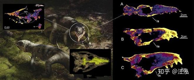 Các nhà cổ sinh vật học phát hiện ra loài bò sát lắm mồm nhất kỷ Phấn trắng - Ảnh 15.