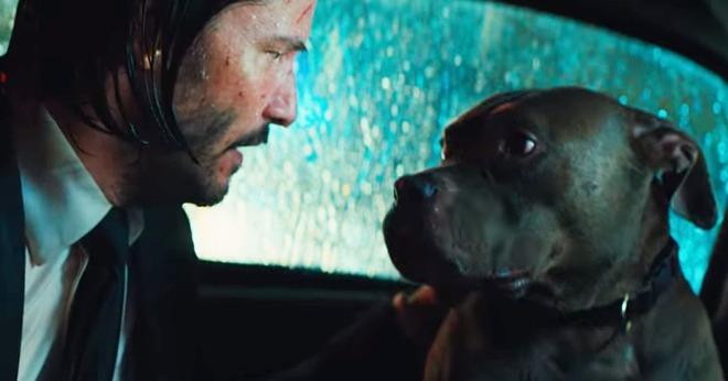 Đạo diễn John Wick từng phải đấu tranh kịch liệt để giữ lại cảnh phim sát hại chú chó trong phần 1 nhằm gây shock cho khán giả - Ảnh 2.
