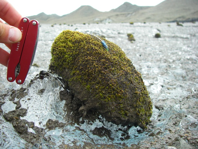 Chuột sông băng: những cục rêu dẻo như bánh nếp biết tự di chuyển làm đau đầu giới khoa học - Ảnh 1.
