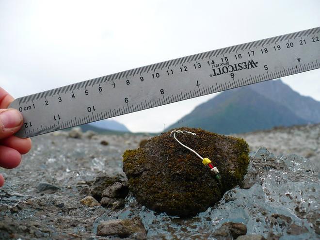 Chuột sông băng: những cục rêu dẻo như bánh nếp biết tự di chuyển làm đau đầu giới khoa học - Ảnh 4.
