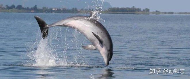 Tại sao cá voi vung đuôi lên xuống, nhưng cá mập lại vung đuôi sang hai bên? - Ảnh 3.
