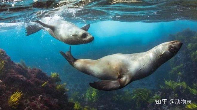 Tại sao cá voi vung đuôi lên xuống, nhưng cá mập lại vung đuôi sang hai bên? - Ảnh 6.
