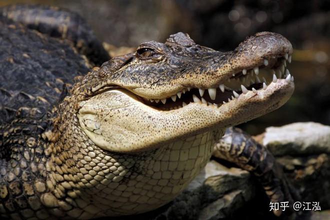 Nghiên cứu mới cho thấy khủng long bạo chúa Tyrannosaurus dựa vào giác quan thứ sáu để yêu? - Ảnh 6.