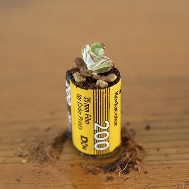 Sau làm móc khóa, vỏ phim cũ giờ đây còn được biến hóa thành chậu cây trồng mini cực dễ thương - Ảnh 3.
