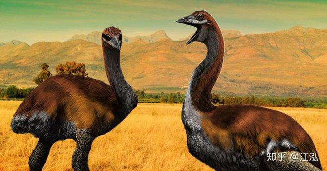 Madagascar phát hiện ra loài chim khổng lồ đầu tiên trong lịch sử có độ cao lên tới 3 mét - Ảnh 5.