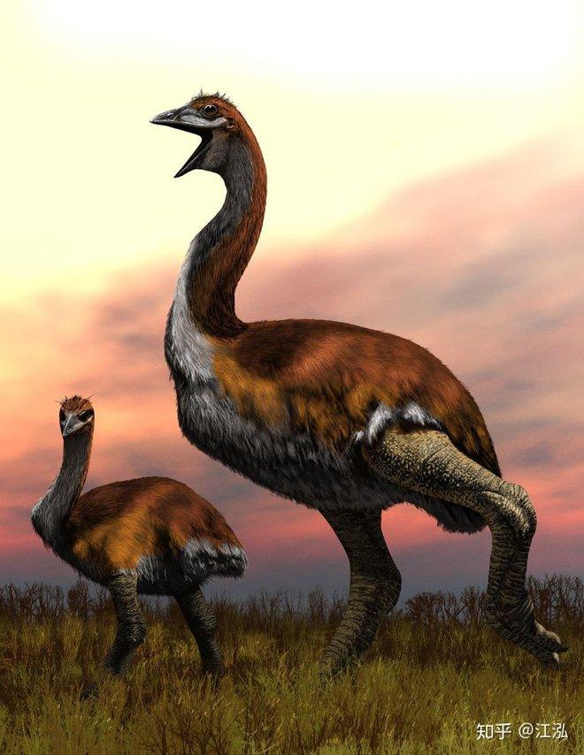 Madagascar phát hiện ra loài chim khổng lồ đầu tiên trong lịch sử có độ cao lên tới 3 mét - Ảnh 11.
