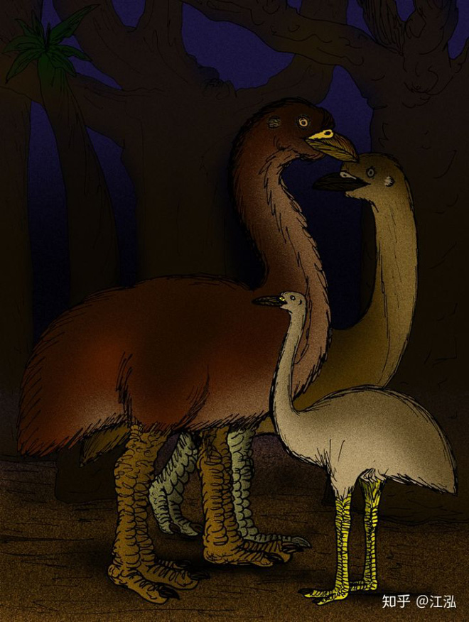Madagascar phát hiện ra loài chim khổng lồ đầu tiên trong lịch sử có độ cao lên tới 3 mét - Ảnh 8.