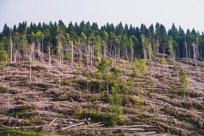 Vì biến đổi khí hậu, cây xanh ngày càng lùn hơn và trẻ hơn - Ảnh 1.