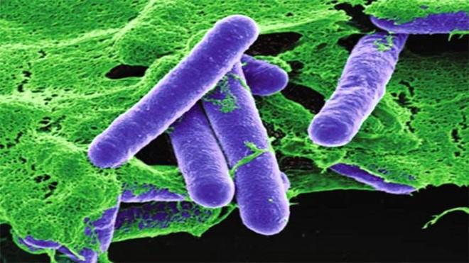 Đâu là hóa chất độc nhất trên đời, chỉ vài trăm nanogram cũng có thể gây chết người? - Ảnh 4.