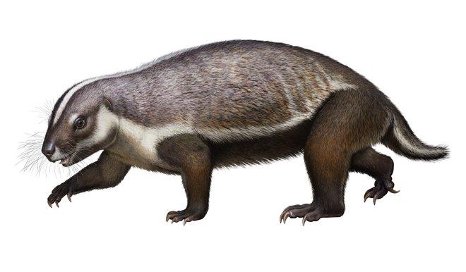 Loài quái vật điên ở Madagascar từng sống cạnh những con khủng long cuối cùng - Ảnh 2.