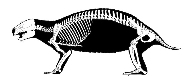 Loài quái vật điên ở Madagascar từng sống cạnh những con khủng long cuối cùng - Ảnh 3.