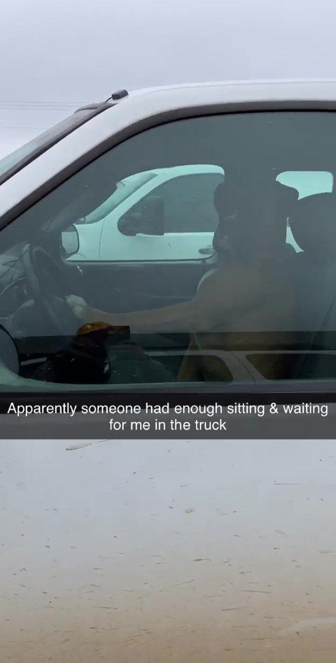 Ngồi đợi trong xe quá lâu, chú chó bấm còi inh ỏi để gọi chủ đang đi mua sắm quay về - Ảnh 2.