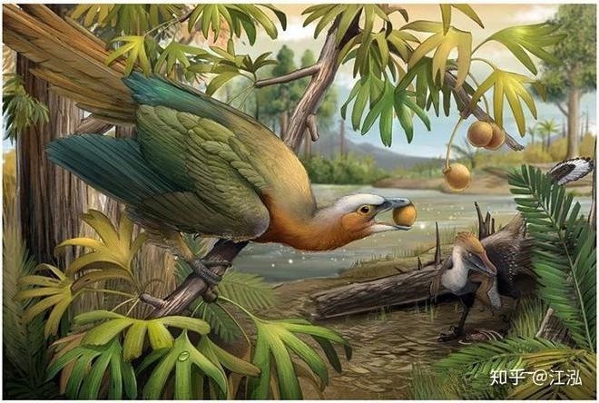 Các nhà khoa học phát hiện ra bí mật giúp loài chim thoát khỏi sự tuyệt chủng hàng loạt - Ảnh 6.