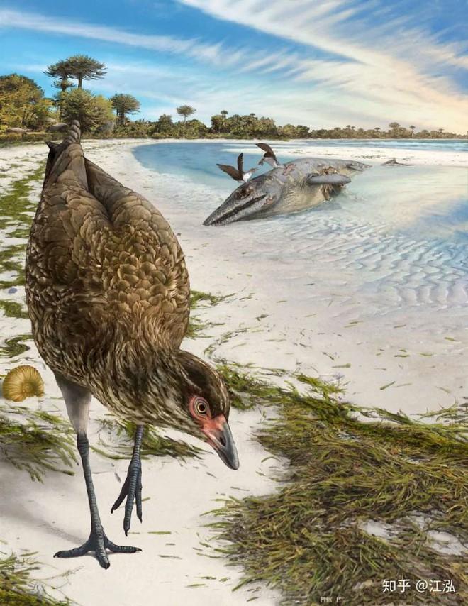 Các nhà khoa học phát hiện ra bí mật giúp loài chim thoát khỏi sự tuyệt chủng hàng loạt - Ảnh 7.