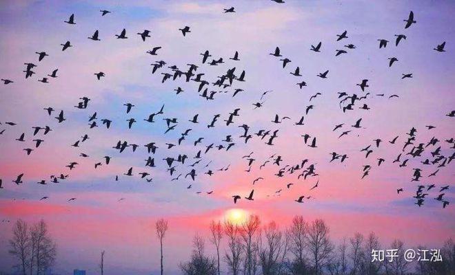 Các nhà khoa học phát hiện ra bí mật giúp loài chim thoát khỏi sự tuyệt chủng hàng loạt - Ảnh 10.