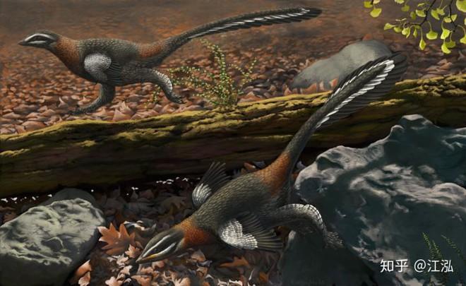 Các nhà khoa học phát hiện ra bí mật giúp loài chim thoát khỏi sự tuyệt chủng hàng loạt - Ảnh 3.