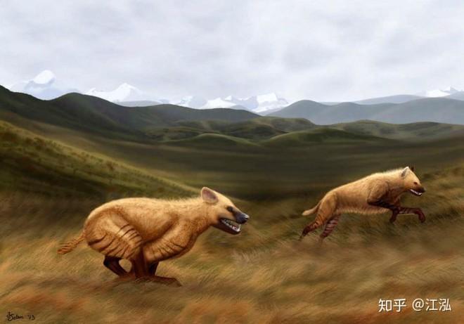 Khám phá bí ẩn của loài linh cẩu thời tiền sử, chúng đã từng sinh sống cả ở Bắc Cực - Ảnh 8.