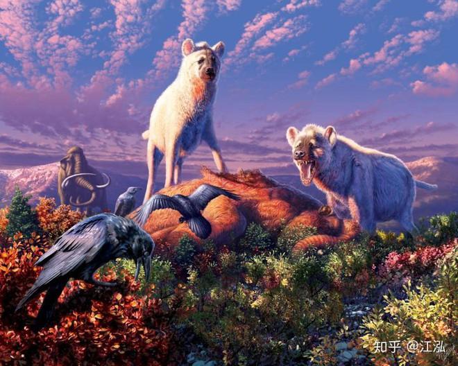 Khám phá bí ẩn của loài linh cẩu thời tiền sử, chúng đã từng sinh sống cả ở Bắc Cực - Ảnh 1.