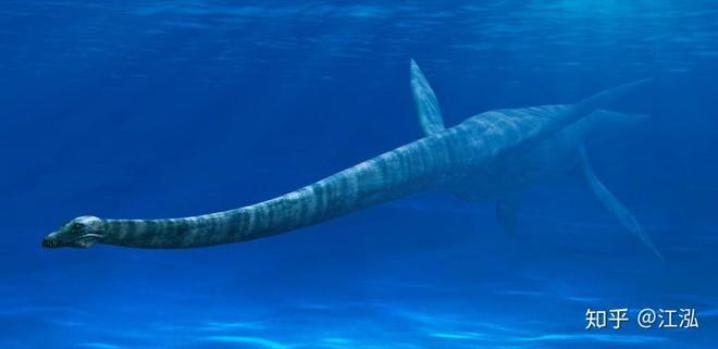 Những con Plesiosaur sau này đã thích nghi với cuộc sống dưới biển sâu.